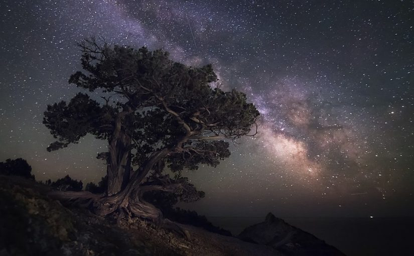 Juniper grove in the New World Cape Kapchik - credit Войчук Владимир